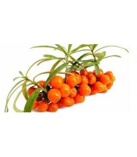 Ceai fructe 30% ghimbir si catina, 20 pliculete/ cutie, BELIN